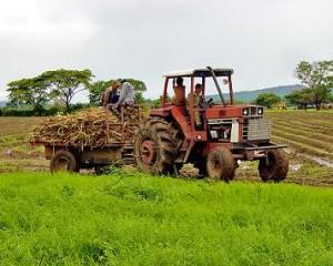 El gobierno rebajará las peonadas necesarias para acceder al subsidio agrario